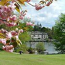 Spring, Lake Windemere, Lake District,Cumbria. by Roy  Massicks