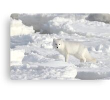 White on White. Arctic Fox #1, on the Tundra, Hudson Bay, Canada Canvas Print