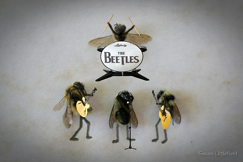 The Beetles by Susan Littlefield