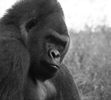 Gorilla Portrait B&W by Chris Edwards