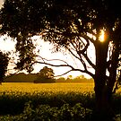 Fields Of Gold by Jane Keats