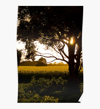 Fields Of Gold Poster