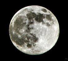 Harvest Moon by Savannah Gibbs