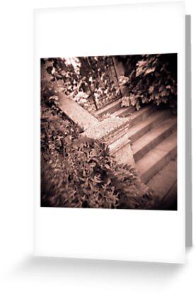 Garden Wall by Craig  Roberts