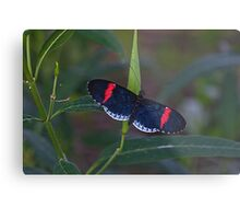 Red & Black Butterfly Metal Print