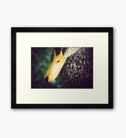Bill Framed Print