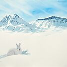Arctic Hare by Cameron Porter