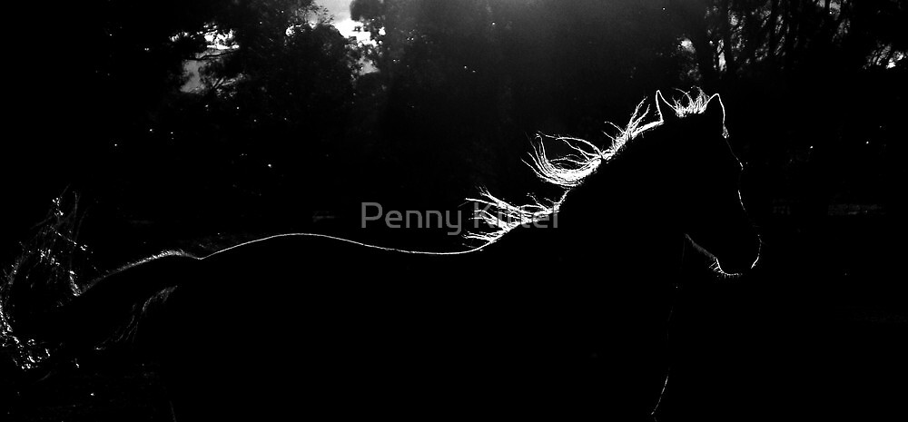 A horse spun from sun by Penny Kittel