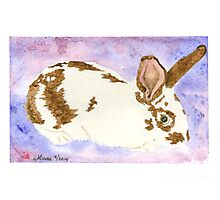 Daily Doodle 24- Rescue - American Rabbit, Robin Photographic Print