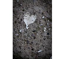 Ten Hearts from West Sussex... Photographic Print