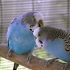 Budgies and Cannaries - Our Feathered Friends by Carol Appelbee