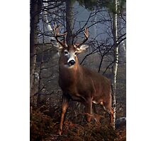 Buck on ridge portrait - White-tailed Deer Photographic Print