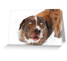 Reese in the snow Greeting Card