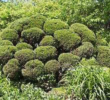 Topiary by Joy  Rector