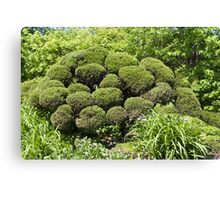 Topiary Canvas Print