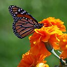 sunshine and flowers by colleen e scott