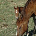 Peeking Foal by lincolngraham