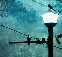 Birds On A Wire #1 by Paul Evans