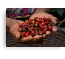 coffee fruit Canvas Print