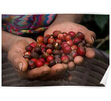 coffee fruit Poster