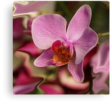 Orchid in colours Canvas Print