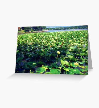 Lotus Blossoms in Bloom Greeting Card