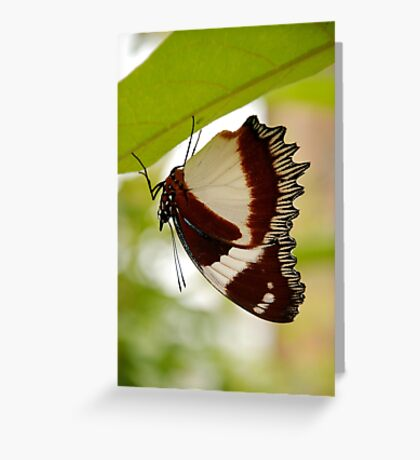 drying out, madagascar Greeting Card