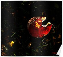 Toadstool with Whale Teeth Poster