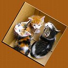 3 Kitties in a Box, Oh My ! by Edmond J. [&quot;Skip&quot;] O&#x27;Neill