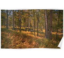 Fern Covered Clearing Poster