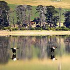 Mountain Ducks by suziimages