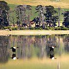 Mountain Ducks by suziimages