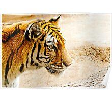 Tiger Profile Poster