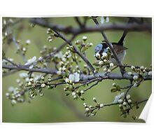 A Bird in the Bush Poster