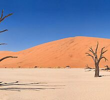 Deadvlei Panorama by Scott Carr