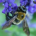Bumble Bee by artsthrufotos