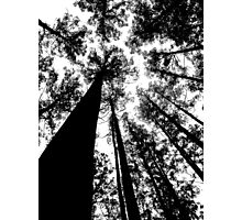 Natures Giants Photographic Print