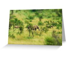 lady elephant walk, pilanesburg Greeting Card
