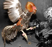 Pinoy Fighting Cock by Blake  Hyland