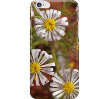 Outback Australian  Wild flowers, Cobar , NSW. iPhone Case/Skin