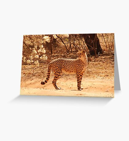 fastest on land Greeting Card