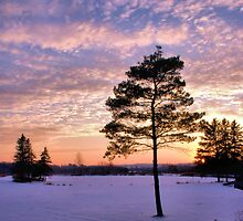 Winter sunset by Erin Fitzgibbon