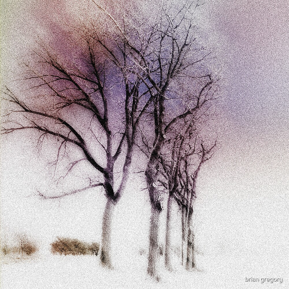 winter trees by brian gregory