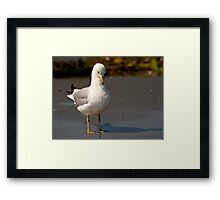 Downcast Gull Framed Print