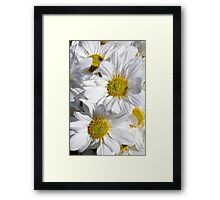 White Daisies (Asters or Sunflowers) Framed Print