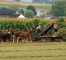 the Harvest by nastruck