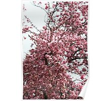Explosion Of Blossom      Poster