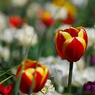 Canberra Floriade 2010 by Kat36
