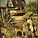 Desert Home by Barbara Manis