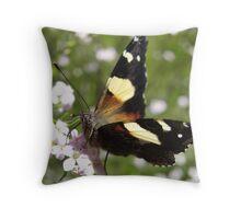 Australian Admiral Butterfly - Vanessa itea - Adelaide, Australia Throw Pillow
